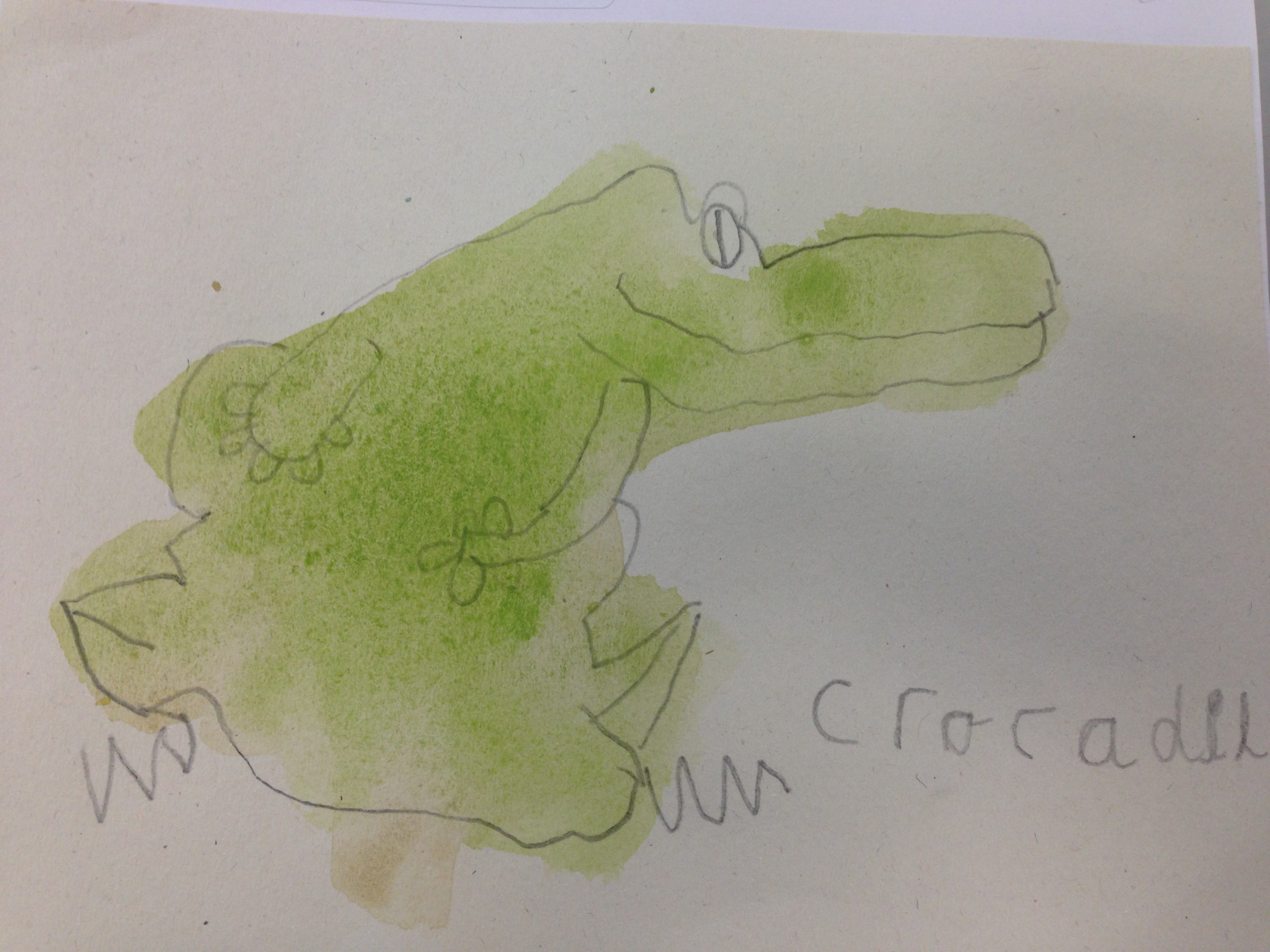 Croc watercolour